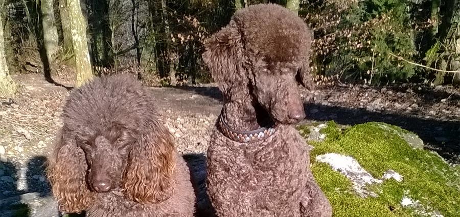 Mine Hunde